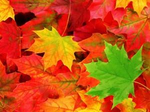 autumn-leaves-10